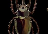 beetles-1498452_640